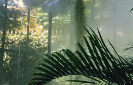 brumisation plantes topicale serre brochardpaysage Mayenne
